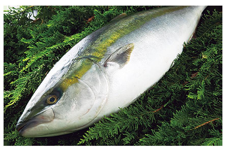 fish001.png
