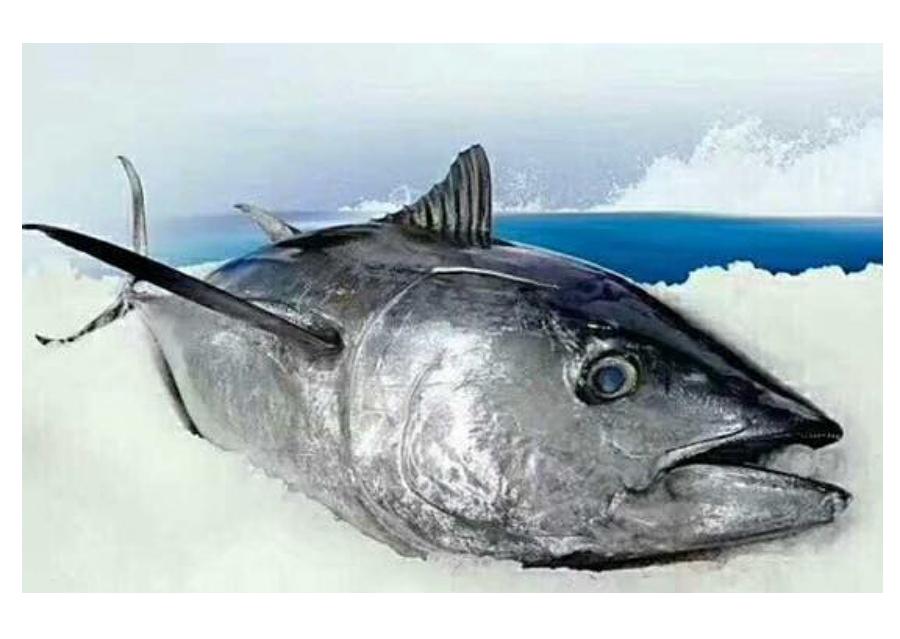 fish003.png